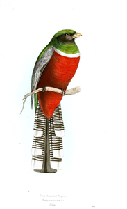 Animal Bird Birds Of Brazil Image