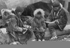 Inuit Artifacts History Image