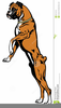 Boxer Dogs Clipart Image