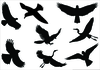Free Flying Bird Clipart Image