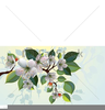 Clipart Of Apple Blossoms Image