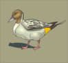 Duck With Brown Background Clip Art