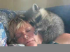 Raccoons As Pets Image