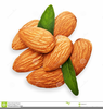 Almond Tree Clipart Image