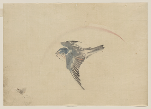 [a Bird Flying To The Left, Seen From Above] Image