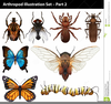 Clipart Insects Cartoon Image