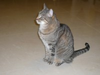 Sitting Cat Image