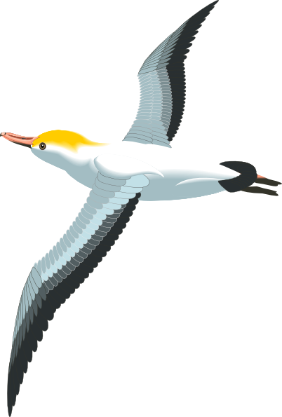 Flying Sea Gull Clip Art at Clker.com - vector clip art online ...