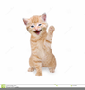 Animated Happy Cat Clipart Image