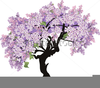 Lilac Tree Clipart Image