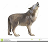 Howl Wolf Clipart Image