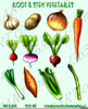 Onion Clipart Free Image