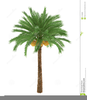 Palm Tree Black And White Clipart Image