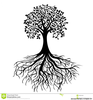 Tree Root Png Image