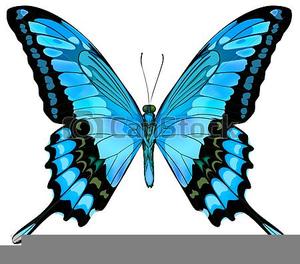 Clipart Papillon Free Images At Clker Com Vector Clip Art Online Royalty Free Public Domain