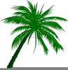 Free Clipart Palm Tree Image