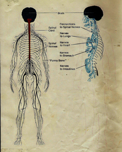First Nerves Image
