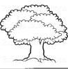 Outline Of A Tree Clipart Image