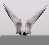 Flying Angel Wings Image
