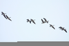 Animated Birds Flying Clipart Image