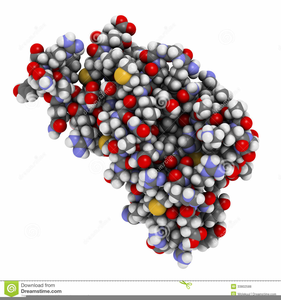 Protein Structure Clipart Image