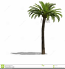 Trees Black And White Clipart Image
