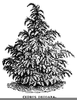 Trees Clipart Black And White Image
