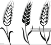 Free Black And White Wheat Clipart Image