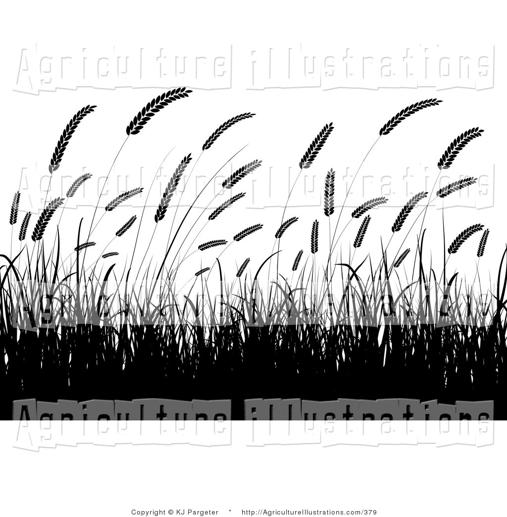 Agriculture Clipart Of Black Silhouetted Wheat Grasses Waving In A ...