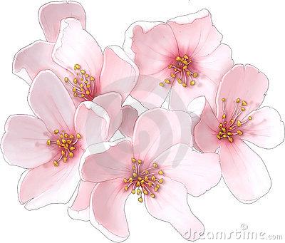 Cherry Blossom Free Images At Clkercom Vector Clip Art Online
