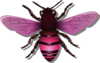 Bee Pink Image