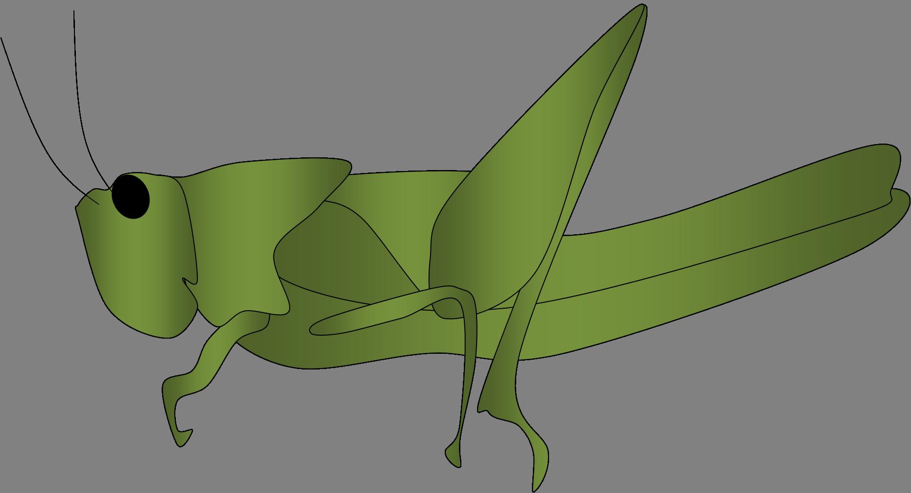 Grasshopper Clipart Lucost image - vector clip art