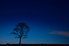 Tree Silhouette At Night Pby Image