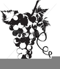 Clipart Grapes And Vines Image