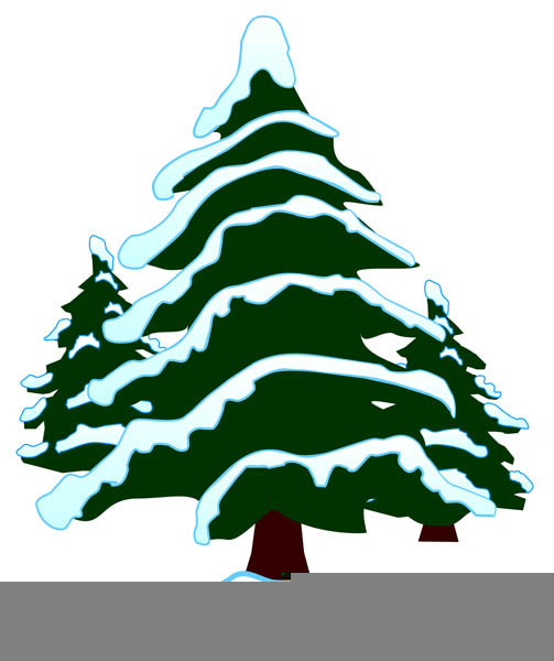Trees evergreen. Snow covered tree clipart