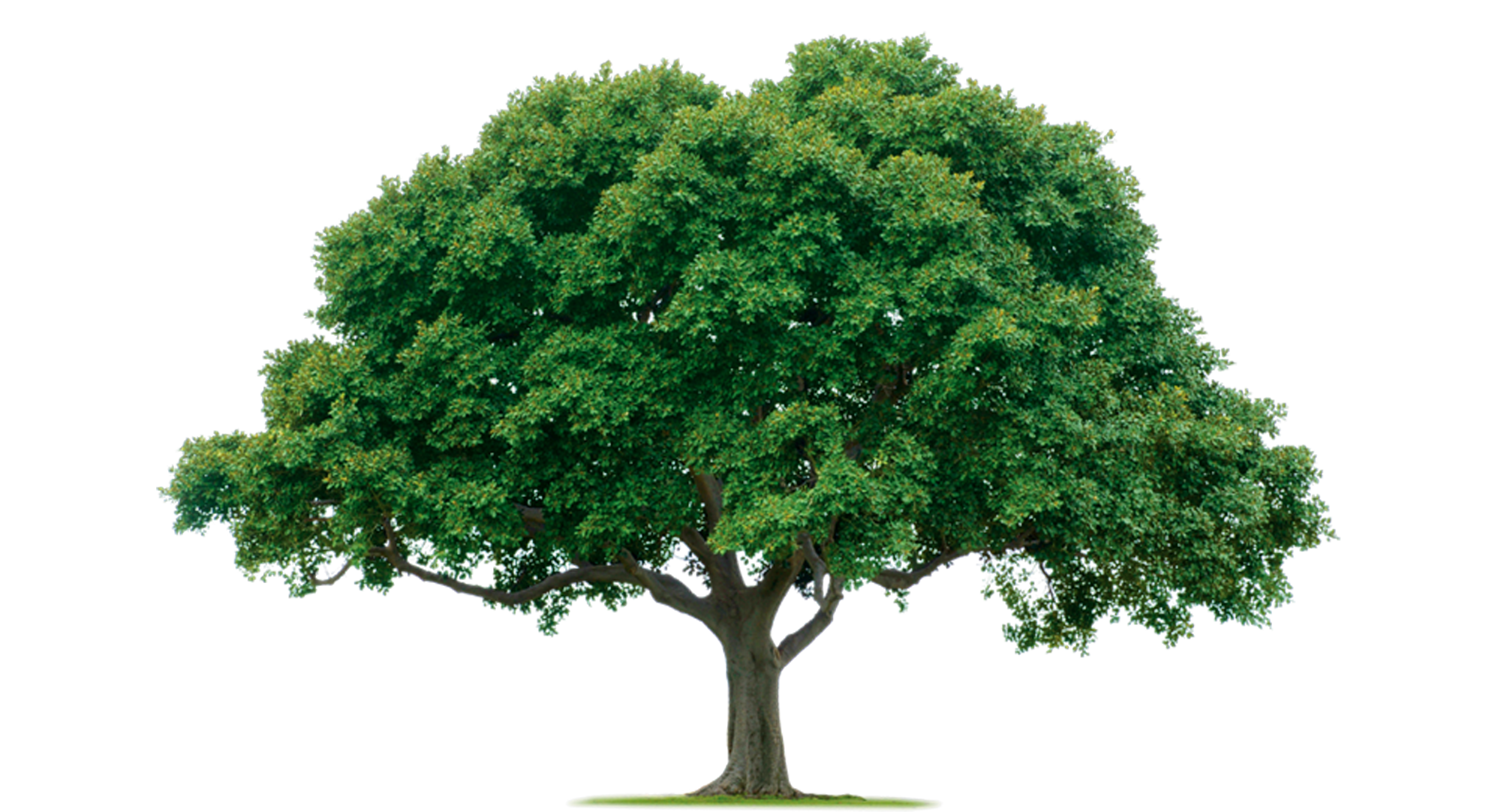 Home Tree | Free Images at Clker.com  vector clip art online, royalty