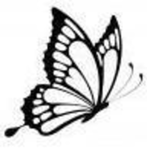 Butterfly Designs Image