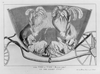 The Vis A Vis Bisected Or The Ladies Coop  / [m. Darly?]. Image