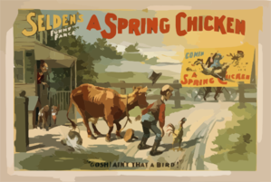 Selden S Funny Farce, A Spring Chicken Clip Art