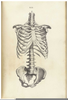 Draw Ribs Skeleton Image