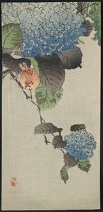 Small Bird And Hydrangea. Image