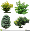 Tree And Shrub Clipart Image