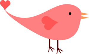 Pink Female Love Bird  Image