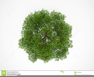 Tree From Above Clipart Image