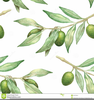 Free Clipart Of Olive Branches Image