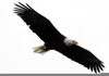 Soaring Eagles Clipart Image