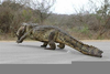 Alligator Crossing Sign Clipart Image