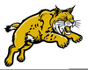 Clipart Of A Bobcat Image