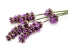 Use Vodka Lavender Tincture Lg Image