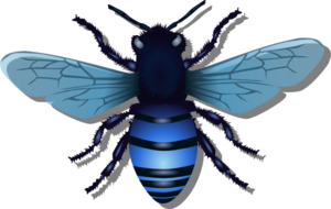 Bee Blue Image